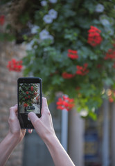 The hand of the person taking the picture of flowers on the smartphone.