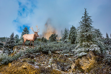 Red deer standing on a hillside