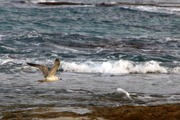 птица на берегу Средиземного моря на севере Израиля
