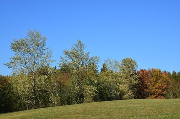 Herbstlandschaft - Hügellandschaft unter stahlblauem Himmel