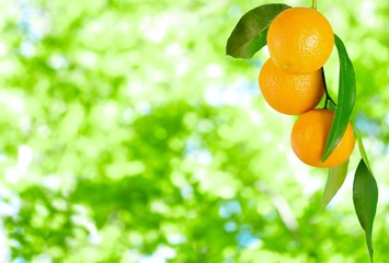 Ripe oranges on branch on blurred natural