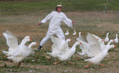 Breeder Marth rounds up a gaggle of geese in a pasture in Hagensdorf