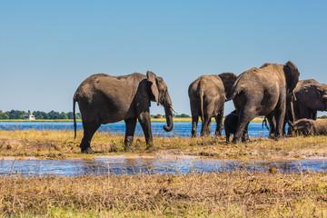 Watering in the Okavango Delta, Africa