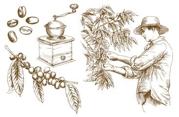 Farmer picking coffee beans. Hand drawn vector illustration.