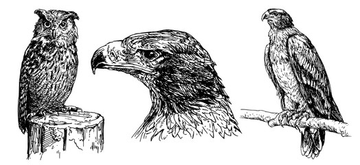 Eagle and owl. Hand drawn set.