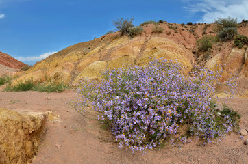 Colourful sandy rock formations of Skazka canyon with violet flowers bush, located on southern shore of Issyk-Kul lake,Kyrgyzstan