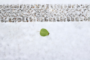 Green leaf beside a tire track on a fresh snow fall
