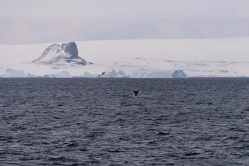 Foto op Aluminium Antarctica Antarctic landscape with glacier and mountains