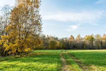 a rural road passes through a green field, trees with yellow orange foliage, autumn landscape