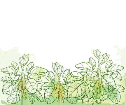 Vector horizontal bunch with outline Soybean or Soy bean with pods and ornate leaf in pastel green on the textured background. Field of legume plant Soya in contour style for vegetarian food drawing.