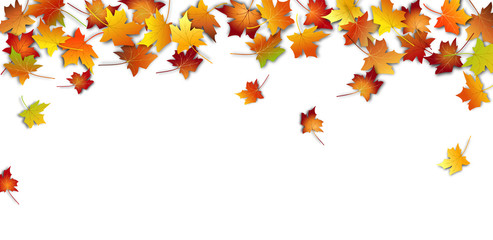 Autumn leaves. Fall colorful maple leaves on white background. Flying foliage. Vector illustration