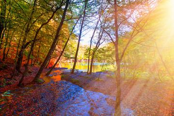 Beautiful autumn landscape - Yedigoller National Park, Bolu