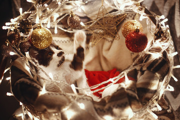 Cute kitty in santa hat playing in basket with lights and ornaments under christmas tree in festive room. Merry Christmas concept. Atmospheric image. Space for text. Adorable kitten