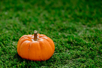 little orange pumpkin on green lawn