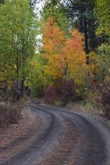 Turnbull Wildlife Refuge Path - Autumn - Pacific Northwest