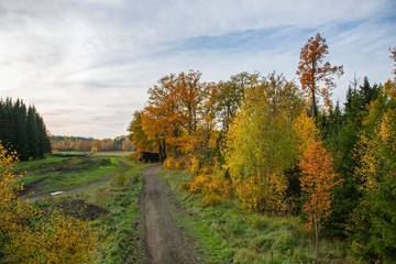Beautiful autumn country landscape view. Gorgeous nature backgrounds. Green yellow trees and road.