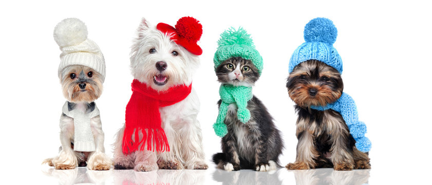 A group of pets wearing hat and scarf