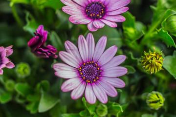 Beautiful Pink and Purple