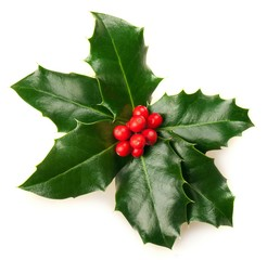 Christmas Holly Isolated on White