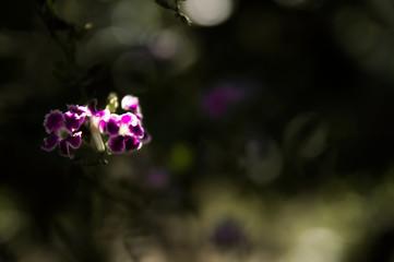 Flor isolada