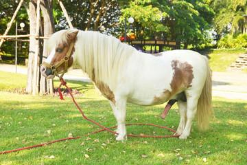pony on green grass