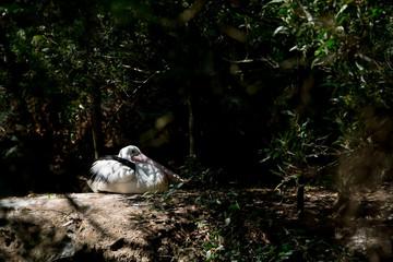 Pelican In the Shadows