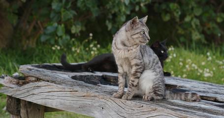 Street cat in park