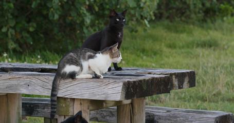 Street cat in the park