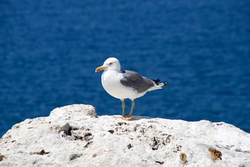 seagull to guard the shore