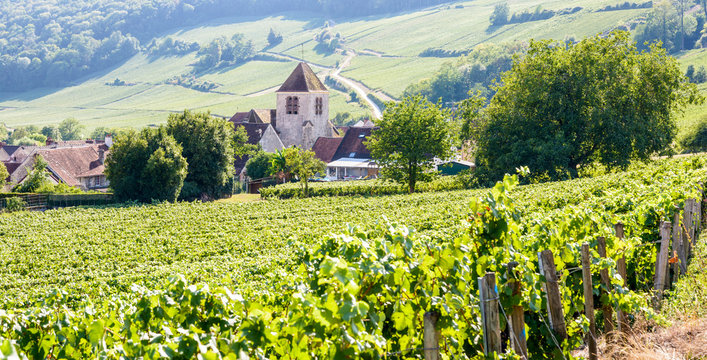 Panoramic view over the small village of Bonneil, France, and its medieval steeple in the Champagne vineyard with rows of grapevine in the foreground and on the hillside in the background.
