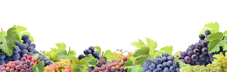 Grapes on a white background Wall mural