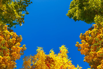 The autumn colorful background with the blue sky and tree foliage