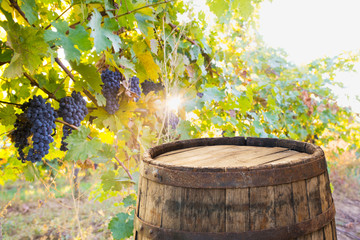 Keuken foto achterwand Wijngaard Red wine with barrel on vineyard in green Tuscany, Italy