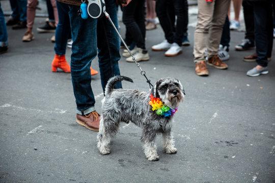 Dog at Brussels Pride Festival 2018