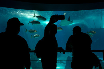 Silhouette of tree person taking photo in front of the glass of aquarium  in Lisbon oceanarium
