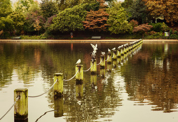 Serpentine Lake in Autumn with seagulls - Hyde Park, London