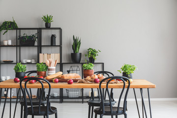 Black chairs at wooden table with apples and basil in grey dining room interior with plants. Real photo