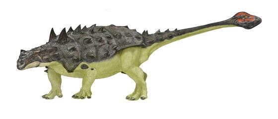 恐竜。エオウプロケファルス。白亜紀後期の曲竜でアンキロサウルス類に属する。体長は6~7メートル程度。北アメリカに分布し、背中から頭部にかけて厚い背板とその上に隆起する骨質の鱗甲で防御しており、硬い棘に覆われていた。尾の先端はアンキロサウルス類特有のこん棒のような形状で、襲いかかる獣脚類の後脚の骨を砕くくらいの威力を持っていた。イラストによる全身再現画像。