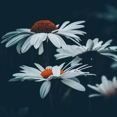flores blancas en la oscuridad