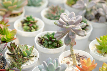 Succulent  ornamental plants are colorful because they are tiny.