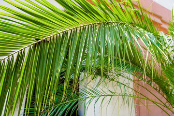 Fotomurales - Closeup green palm leaf near building. Concept of tropic house plants.