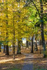 Autumn landscape. Pathway in the autumn park