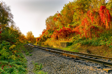 Railway or tramway track in a beautiful autumn park fog, bright warm autumn colors