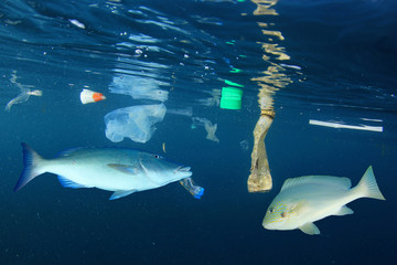Fish and plastic pollution in ocean