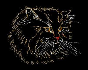 Muzzle of a cat