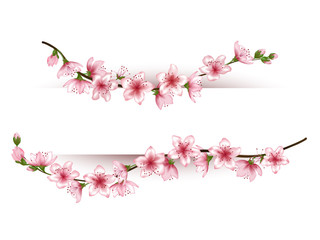Flower branches vector frame for text. Decorative border for greeting card, invitation, banner. Realistic tree blossom  illustration on white background. Floral graphic design.
