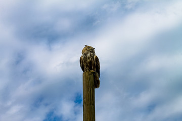 Owl sitting on a pole