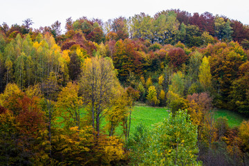 Beautiful autumn colors in mountain forest. Natural  background.