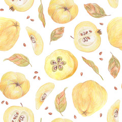 Seamless pattern. Quince, leaves and seeds painted with colored pencils isolated on a white background. Food repeated illustration. Fruit endless design for fabric, wrap paper or wallpaper.