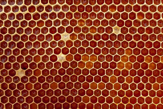 Apiculture - récolte du miel